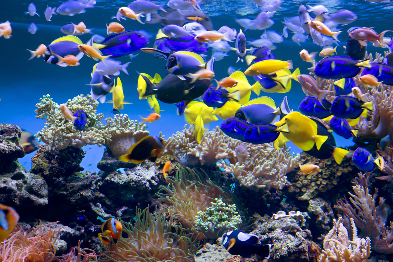 A large fish tank full of brightly colored fish.